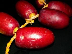 buah_kurma1
